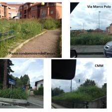 20140820_vegetazione piossasco